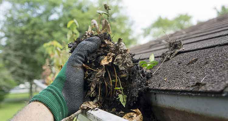 Clean Out Your Rain Gutters Roof Cleaner