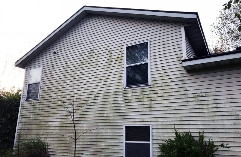 algae growth on vinyl siding house in grand rapids, mi